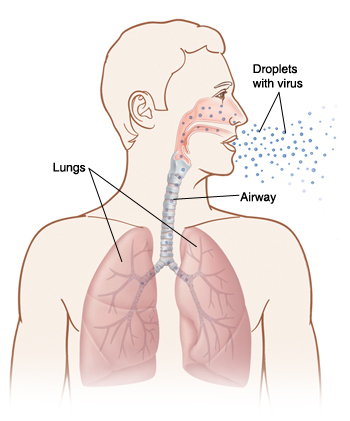 Outline of human head and chest with head turned to side. Inside of nose, airway, and lungs are visible. Droplets with virus are being breathed in to nose and lungs.