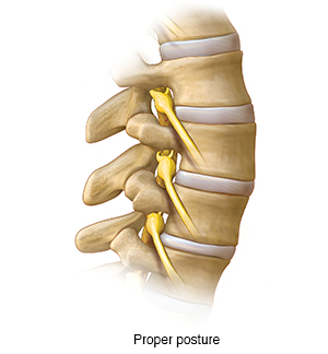 Side view of lumbar spine.