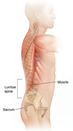 Side view of male body showing spine and muscles.