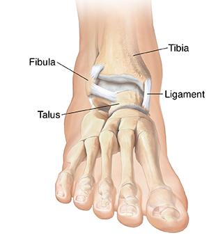 Front view of foot showing bones.