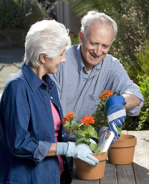 Senior man and woman gardening together.