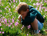 Picture of young boy sitting in a field of wild flowers