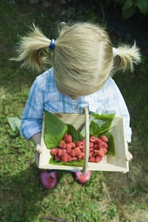 Girl looking down at basket of berries